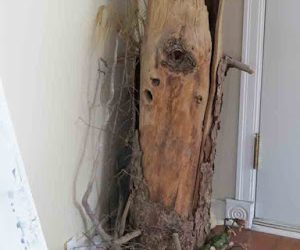 An inspiring Stump