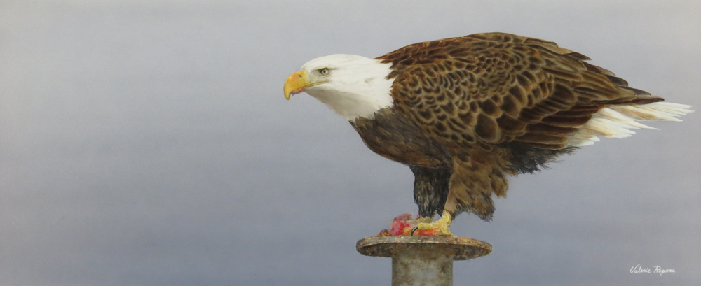 A Valerie Rogers painting of Eagle
