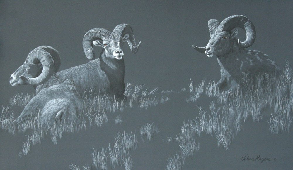 Valerie Rogers Painting of Big horned Sheep