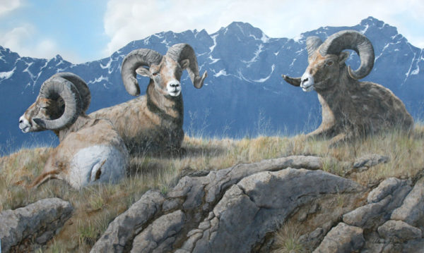 acrylic painting of big horned sheep by Valerie Rogers
