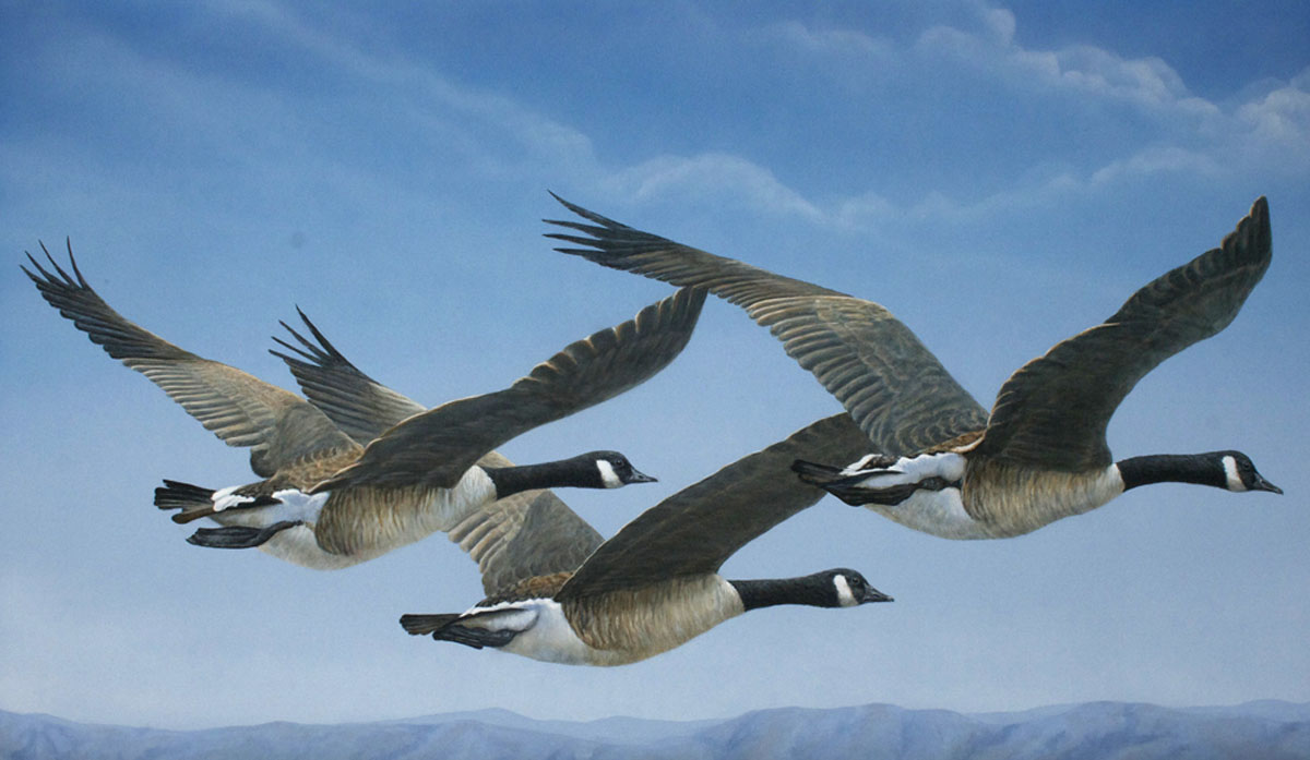 Valerie Rogers Painting of Canadian Geese
