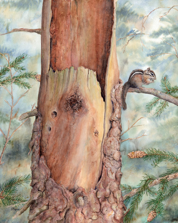 watercolour painting of chipmunk by Valerie Rogers