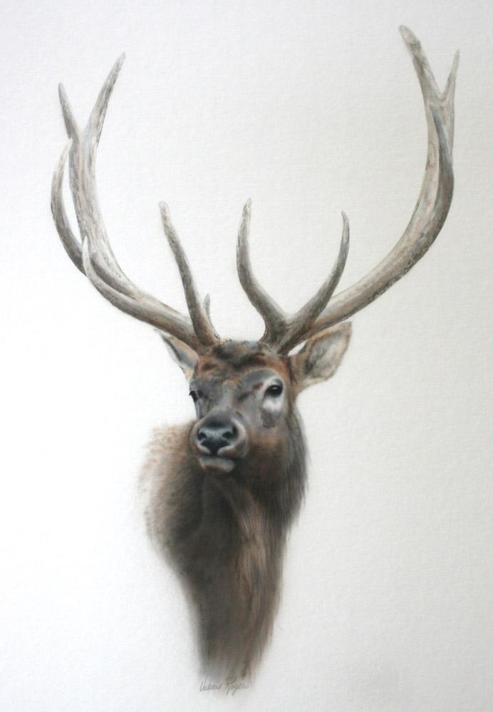 vignette of elk head