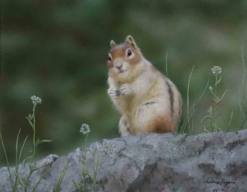 acrylic painting of ground squirrel