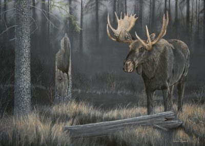 Out of the Dark – Moose