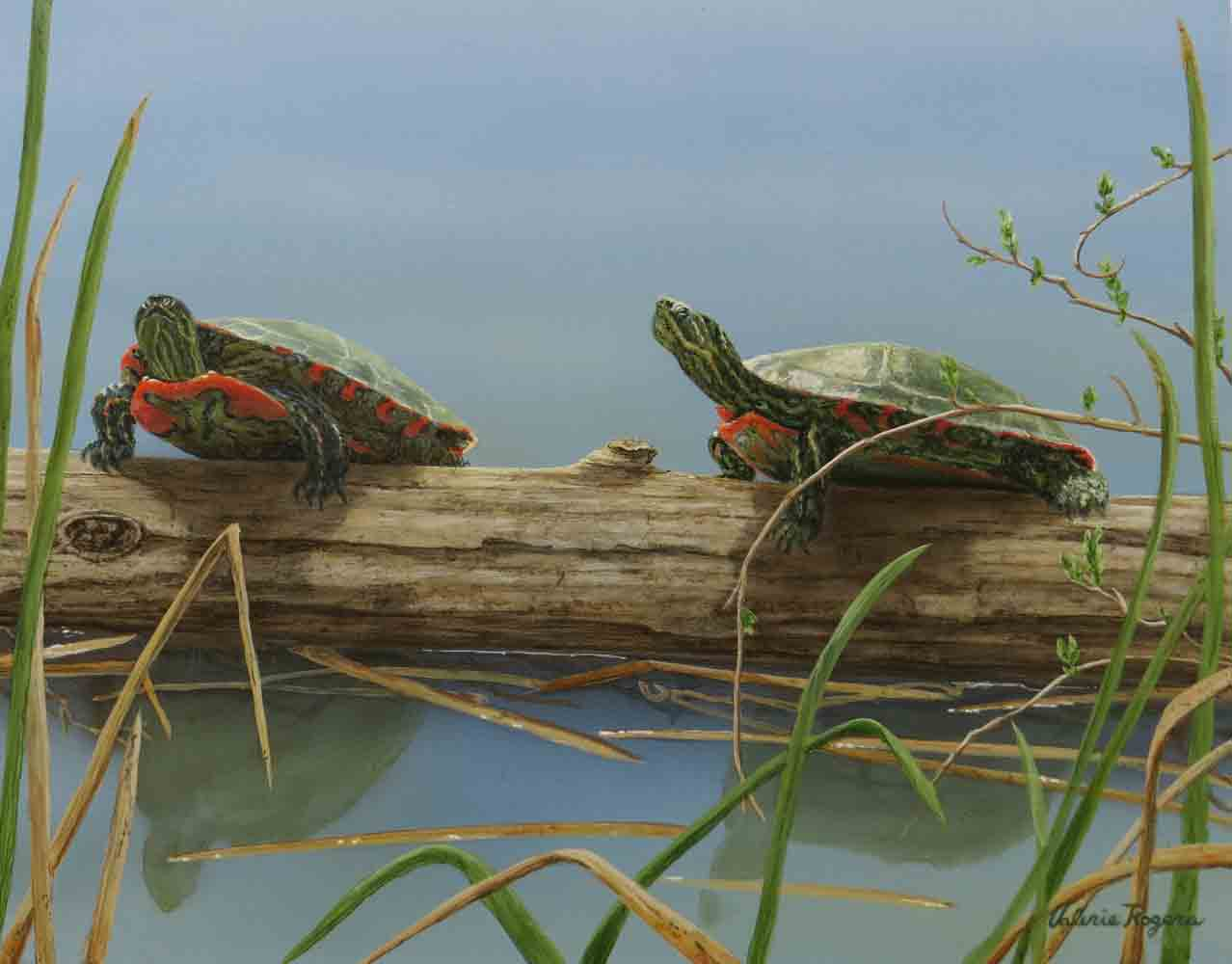 Valerie Rogers painting of painted turtles