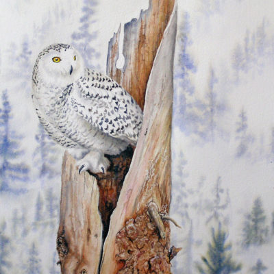 Award winning owl painting by Valerie Rogers