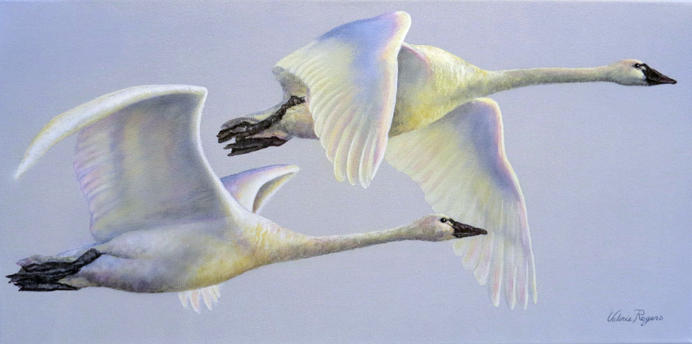 Flying swam painting by Valerie Rogers