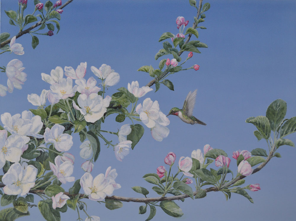 Valerie Rogers painting of humming bird on apple blossoms