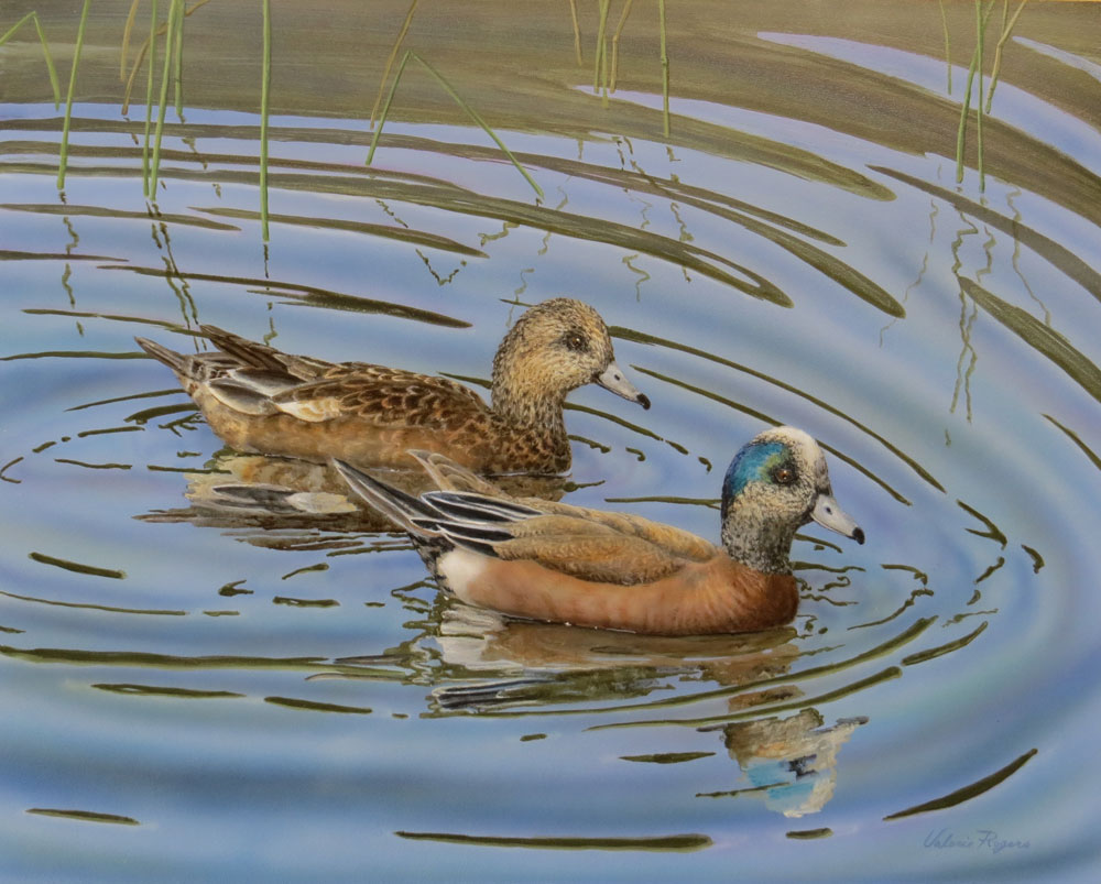 A Valerie Rogers painting of American Widgeons