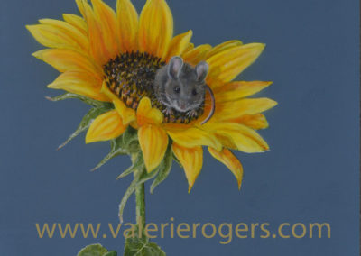 Sunflower Mouse