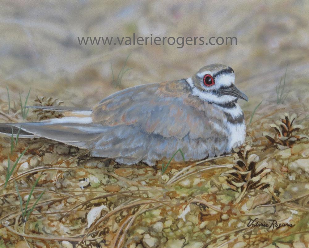 Valerie Rogers Painting of Killdeer nesting