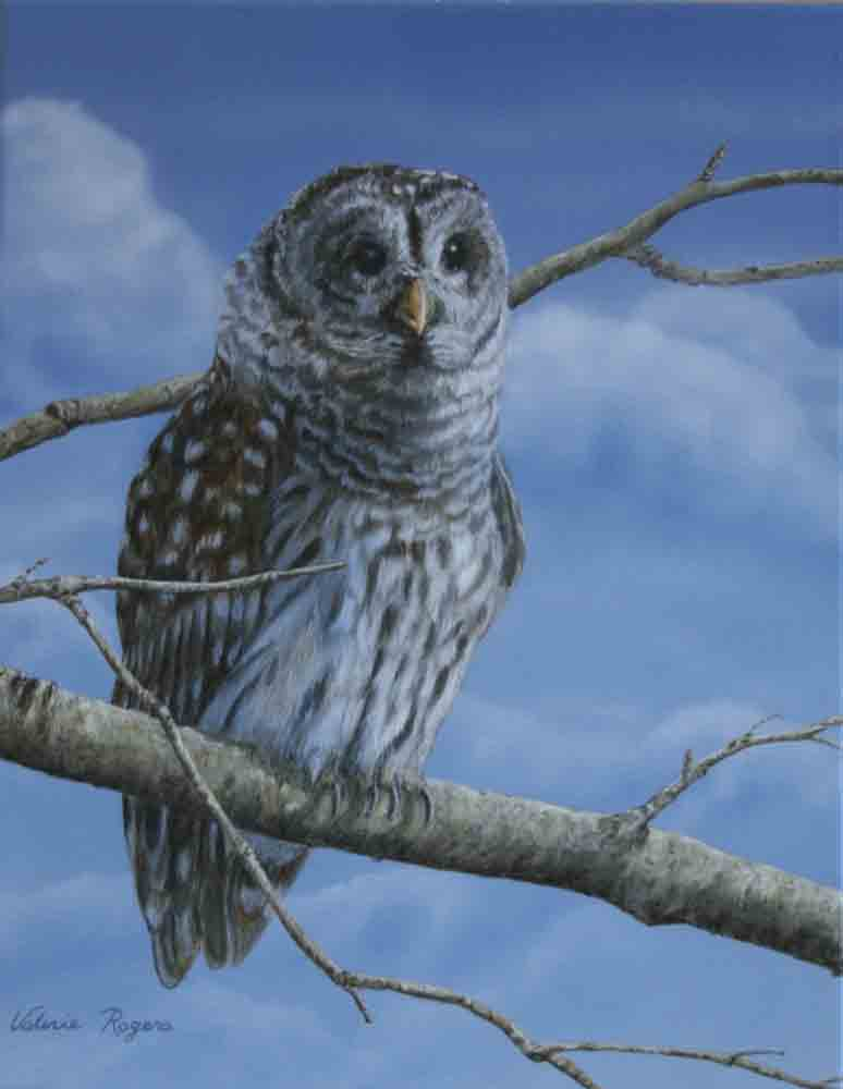 Painting of owl on branch in front of wispy clouds