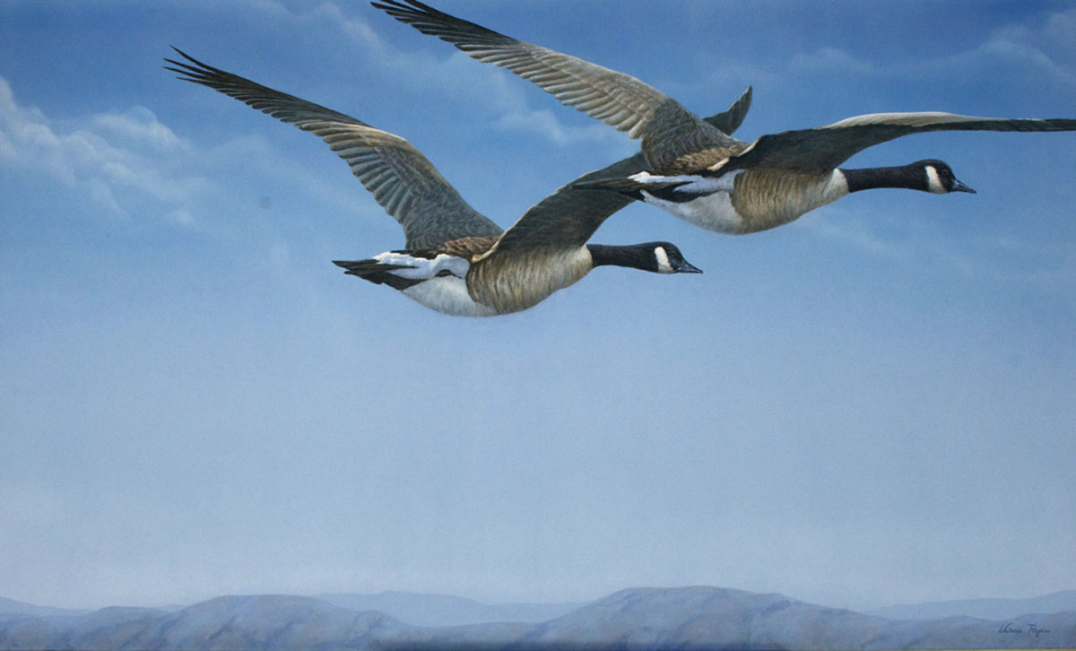 Canada_Geese_Valerie_Rogers_Lift_Off_7