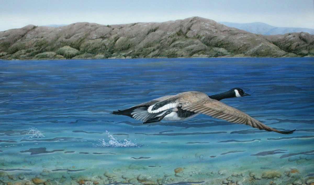 Canada_goose_Valerie_Rogers_Lift_Off_2