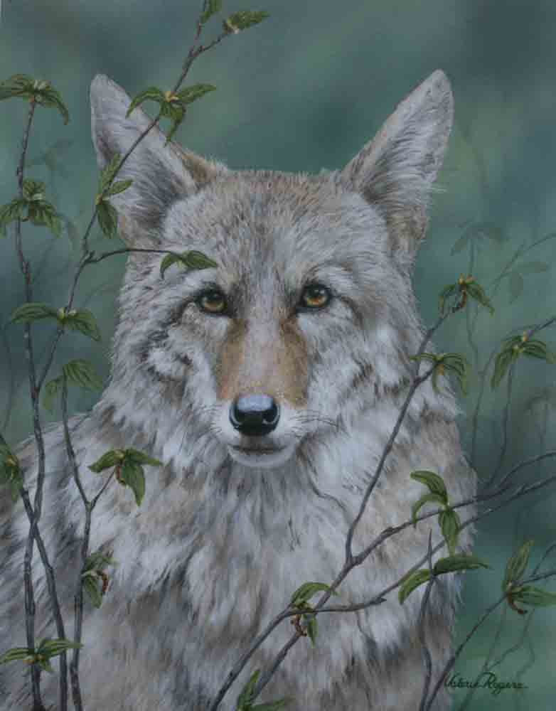 painting of coyote by Valerie Rogers