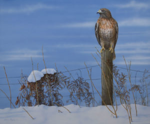Red Tail Hawk painting by Valerie Rogers