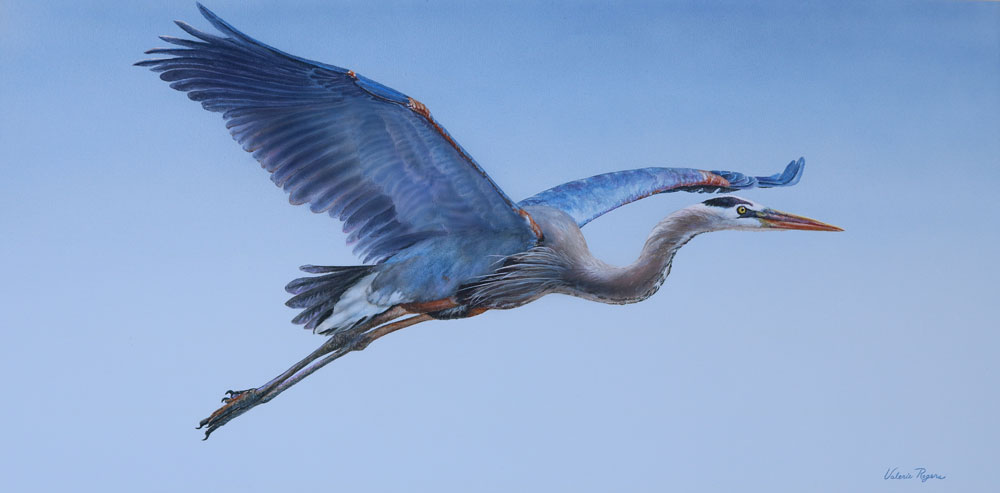 A Valerie Rogers painting of a Great Blue Heron